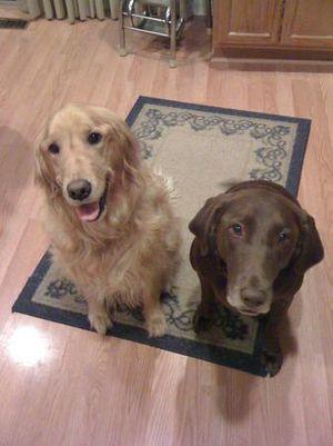 Reesse & Daisy