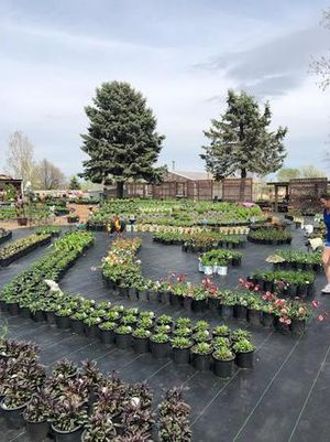 Offering a large selection of flowers, trees, shrubs and more!