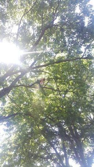 Image 2 | Good  Air Tree Service LLC