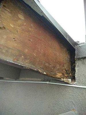 Los Angeles Termites