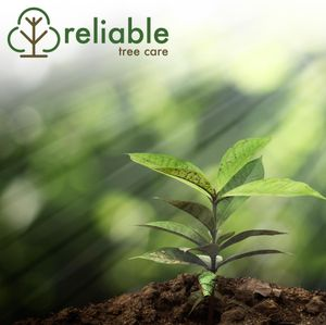 Get your trees off to the right start with Reliable Tree Care