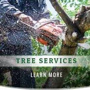 Image 2 | Monkeys Tree Services Inc
