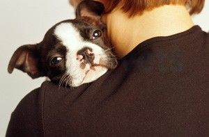 Animal Medicine & Surgery of Little Neck