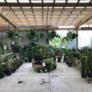 Image 6 | Gregory Creek Garden Center