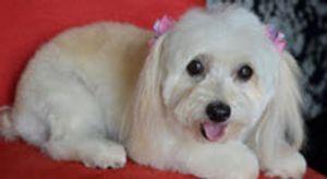 Image 4 | Pet Spa & Grooming