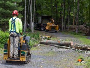 Image 5 | Tree King of Long Island