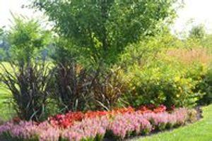 Image 10 | Plant Studio Landscape