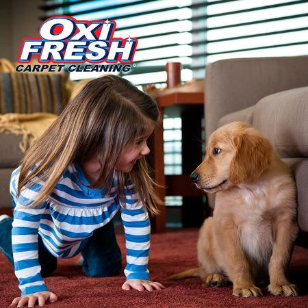 Image 2 | Oxi Fresh Carpet Cleaning