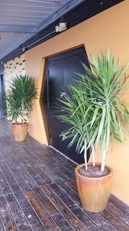 Beautiful patio plants and indoor plants