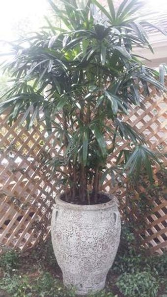 Top quality plants