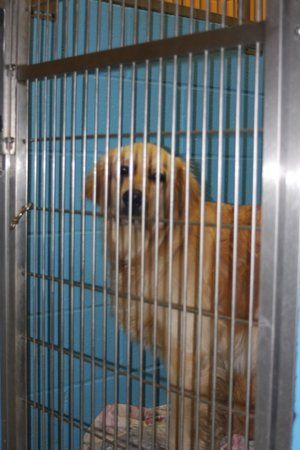 Image 2   VCA Spring Animal Hospital