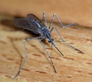 Mosquito Bloomington, Indiana Yes Pest Pros