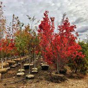 Image 5 | Gregory Creek Garden Center