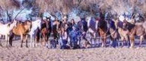 Image 7   Maximum Performance Horsemanship Training & Farrier Services
