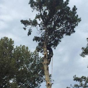 Keep your family safe by using Pacific Tree Care!