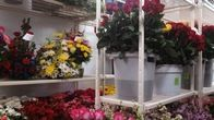 Beautiful selection of fresh flowers available at our local flower shop.