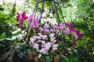 The professionals at Blooming Orchids Landscaping inc. can help you maximize the use of your outdoor space while adding beauty to the outside of your home or business. We make landscape design easy by getting work done for you and offering the necessary services to maintain it. We even offer delivery for soil, mulch and more so maintenance in Miami, FL is a breeze!   Give us a call at and see what we can do for you!
