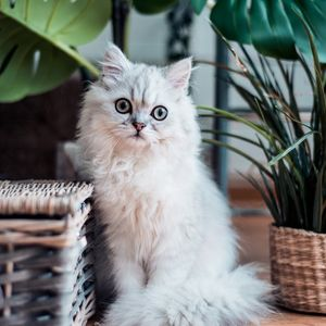 We treat cats as well as dogs at Angel Oak Animal Hospital