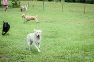 Image 3 | Waggin' Tails Pet Ranch