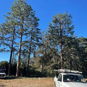 After we take care of your trees! Call today for a free estimate.