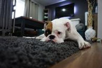 We love our pets, but we hate their messes. Chem-Dry of Stromsburg offer a special cleaning treat called Pet Urine Removal Treatment that is specifically designed to remove pet urine and pet odor from your carpet.