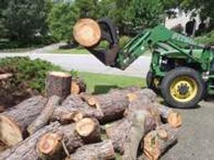 Our team has fulfilled a number of major tree projects in Wilmington, and we can complete any size job for you.