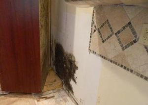 QCI Mold Removal and Testing finds hidden black mold in Clearwater kitchen.