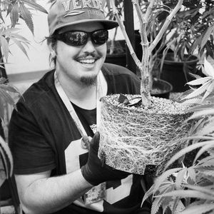 Image 5 | Verde Natural - Recreational Marijuana Dispensary
