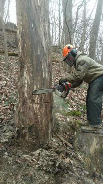 Image 3   Wild Land Tree Care