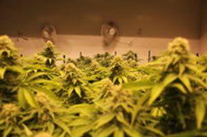 Image 8 | Verde Natural - Recreational Marijuana Dispensary