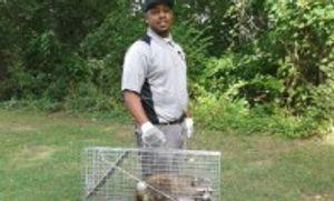 Image 3 | Nest Pest Control Washington DC