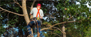 Image 3 | Walsh Tree Service