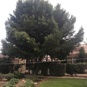 Prevent damage to your home, by getting your trees removed!