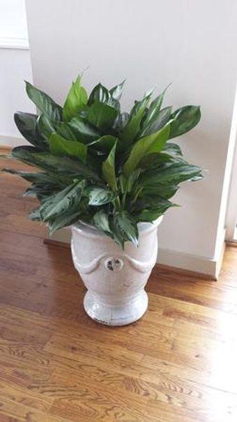 Image 22   Tall Plants