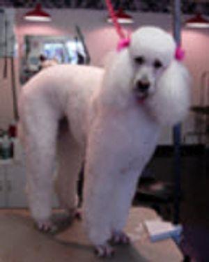 Image 3 | Pet Spa & Grooming