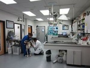 Image 8   VCA Woodland South Animal Hospital