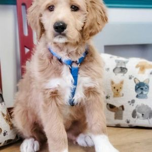 At Animal Care Clinic of Rural Hall, we are happy to see all your kitten and puppy visits