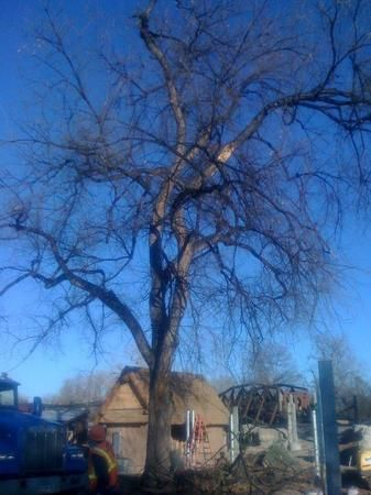 Image 2   Arbor-Pro Tree Experts