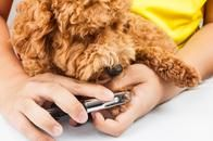 Nail Clipping Service for Dogs