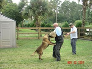 Image 4 | Broward K-9 Services Inc