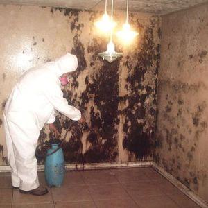 Image 6 | America Asbestos Solutions, Inc