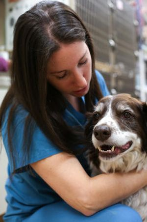 This sweet patient gets some love from one of our compassionate veterinary technicians. At Stevenson Village Veterinary Hospital, we understand how much your pet means to you and your family because we are pet-lovers ourselves!