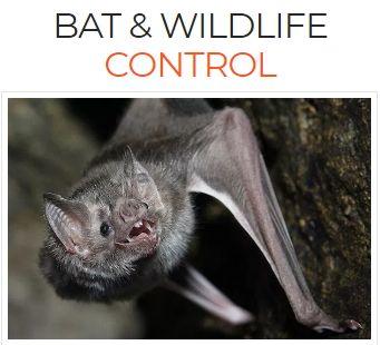 Bat & Wildlife Control Services