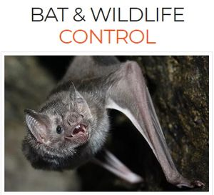 Bat & Wildlife Control Services