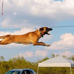 Agility training with Have A Great Dog