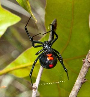 Image 8 | Pest-Tec