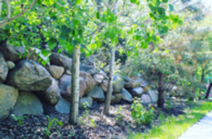 Landscaping Maintenance Services in Omaha, NE