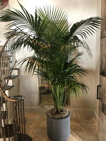 Image 25   Tall Plants
