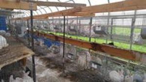 Image 5   Wanabea Farm LLC