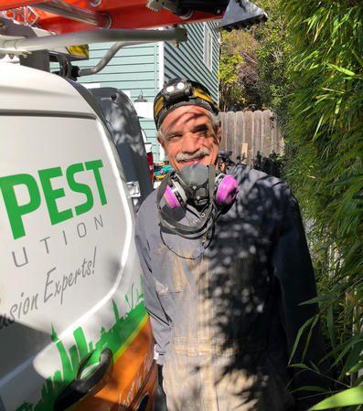Image 5   Bay Pest Solution